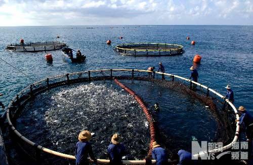 经济频道 宏观 > 正文          图为海南省大力发展海洋渔业,出口